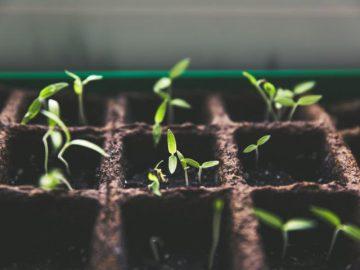 Urban Gardening goes underground